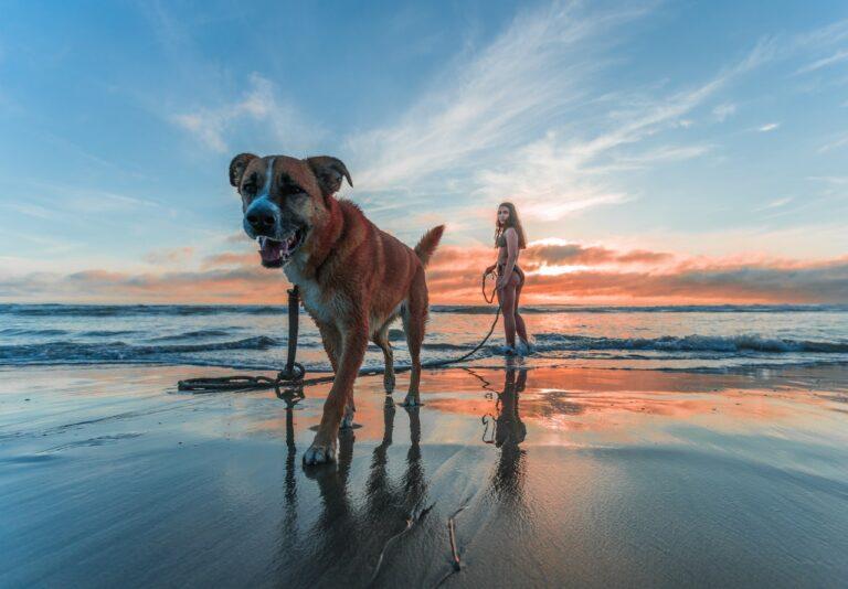Husk disse råd, når du tager hunden med på stranden