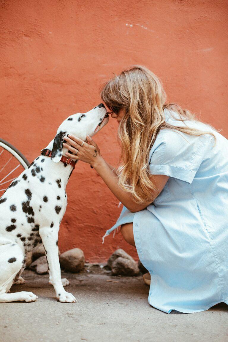Skal kæledyrene med på rejse – Eller kan de blive hjemme?