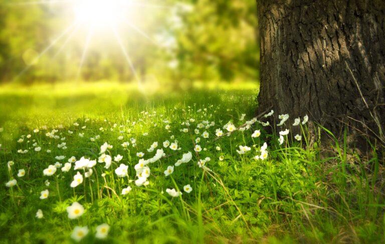 Naturmenneske? Gør haven til et ferieparadis