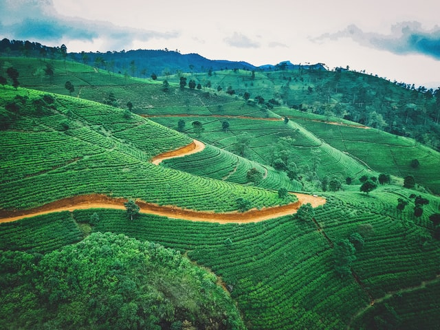Derfor bør du rejse til Sri Lanka